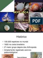 Aula Teórica 7 - Mollusca