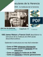 Cap. 11- DNA Molec de La Herencia