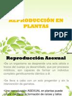 Reproducción en Vegetales