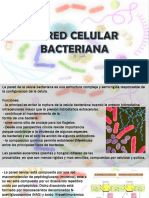 Pared Bacterianalkl