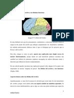 Los Lóbulos Del Cerebro y Sus Distintas Funciones