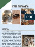 LA PESTE BUBÓNICA.pptx
