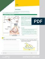 01_adaptacion_curricular_05.pdf