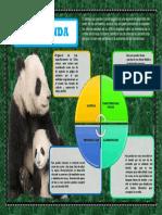 Infografia Del Panda