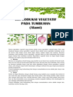Sistem Reproduksi Vegetatif Alami