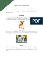 Las 10 razas de perros más pequeños del mundo.docx
