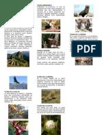 Flor y Fauna Del Peru