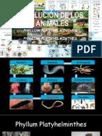 EVOLUCIÓN DE LOS ANIMALES.pptx