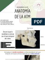 anatomía de la atm