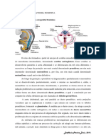 1. Revisão - Embriologia, Fisiologia e Anatomia Do Sistema Feminino