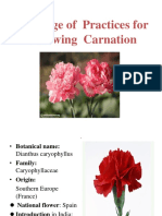 18506_Package of Practices for Growing Carnation.pptx