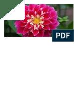 Flor Rosa Choque