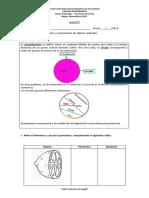 Guía+2+Cálculo+de+diametro+y+perímetro.