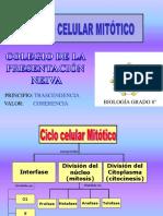 CICLO CELULAR MITÓTICO Y MEIÓTICO 8°  2019 (1)