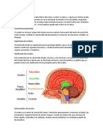 Cerebro.docx