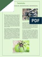 29Tarantulas.pdf