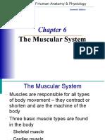 musclesystem-pdf-word.doc