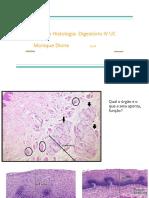 Revisão histologia IV UC