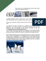 Pingüinos (3)