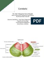 Cerebelo2018(1).pdf
