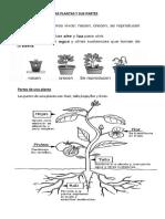 Lectura Sobre Las Plantas y Sus Partes