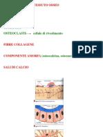 2. Tessuto Osseo - Struttura e Funzioni