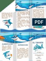 Tiburón Paolo