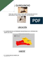 Disertacion Quirquincho