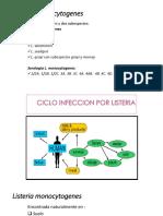 Listeria  monocytogenes.pptx