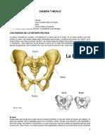 12CaderaMuslo.pdf