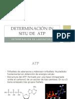 Determinación de ATP
