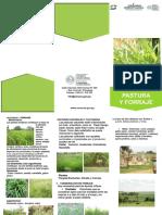 Pasturas y Forrajes del Paraguay - SENACSA