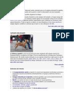 Damos La Bienvenida Al Wikiportal Canino
