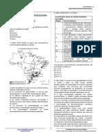 Industrialização Brasileira - Exercícios