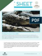 hunting viruses in crocodilus sp
