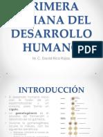11. Primera Semana del Desarrollo Humano(1).pdf