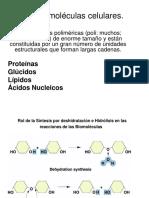 Nº3,Proteínas-Enzimas.