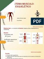 El Sistema Muscular y Esquelético (1)