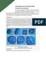 Desarrollo embrionario en el erizo de mar.docx