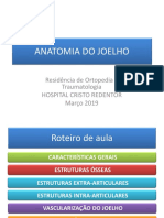 Anatomia Do Joelho 2019
