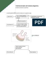 Fisiología del Sistema Digestivo.