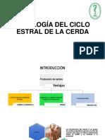 FISIOLOGIA DEL CICLO ESTRAL DE LA CERDA