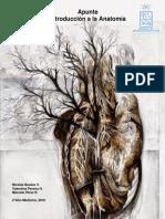 Apuntes Introducción a la Anatomia