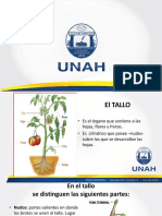 Tema 6 El Tallo PDF.pdf