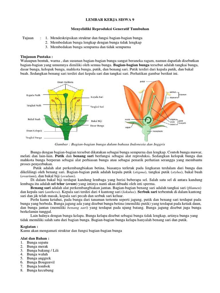 Lembar Kerja Siswa 9 Menyelidiki Reproduksi Generatif Tumbuhan