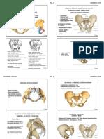 Anatomia 7 Pelvis Alumno 2019