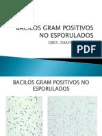12 BACILOS GRAM + (1)