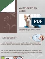 Vacunas Gato