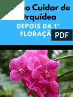 Como cuidar de orquídeas depois da primeira floração