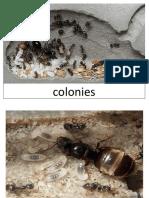 ants.docx